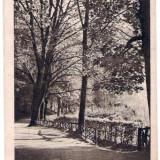 BRASOV ALEEA DE SUB TAMPA 1924 - Carte Postala Romania 1904-1918, Circulata, Fotografie