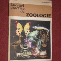 Lucrari practice de zoologie - Maria Suciu, Alexandrina Popescu (1981) - Carte Biologie