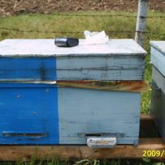 Stupi cu albine - Apicultura