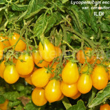 Seminte tomate cherry galbene - ILDI - 30 seminte/plic