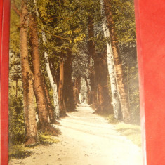 Carti Postale Romania 1904-1918, Circulata - Ilustrata Ramnicu Valcea -Alee in Gradina Zavoi, circ. cu stamp. Ciineni Bucuresti, Ambulanta 16- Clasica