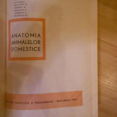 V. GHETIE--ANATOMIA ANIMALELOR DOMESTICE COMPLETA--1967 - Carte Medicina veterinara