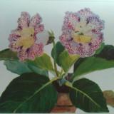 Carte veche - Printesa Bibescu/ Princesse Bibesco - Florile/ The Flowers, anii '40 - Format Mare cu 40 planse color