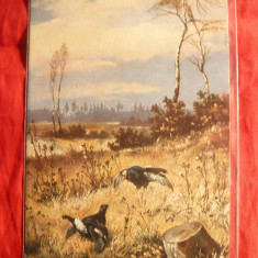Carte postala tematica - Ilustrata Vanatoare- Fazani, inc.sec.XX