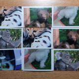Stikere animale Coop, 9 bucati - Colectii