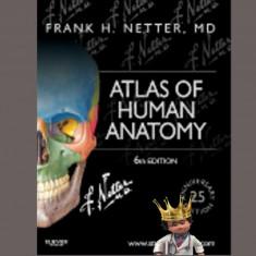 Atlas of Human Anatomy Netter 6th