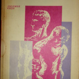 Psihologia varstelor an 1981/397pag- E.Verza, U.Schiopu - Carte Psihologie