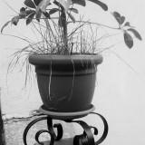 Suport fier forjat pentru ghiveci de flori
