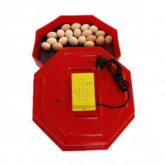 Incubator cu termostat Cleo 5