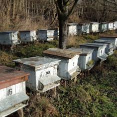 Apicultura - Vand Stupi 40 de familii albine cu tot cu lada - Stupina