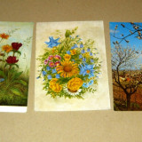 Lot 3 vederi - natura - flori - plante - 2+1 gratis - RBK16041, Ambele, Europa