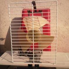 Ventilator Vortex