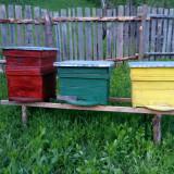 apicultura stupi