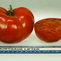 Seminte rosii - Rosii soiul ´´ Mortgage Lifter ´´ 5 seminte pentru semanat