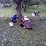 Tuica de prune naturala